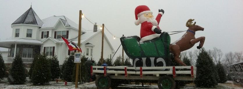 Blue Ridge Christmas Tree Farm