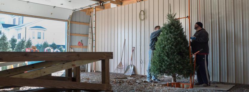 Cut Your Own Tree | Annville | Blue Ridge Christmas Tree Farm